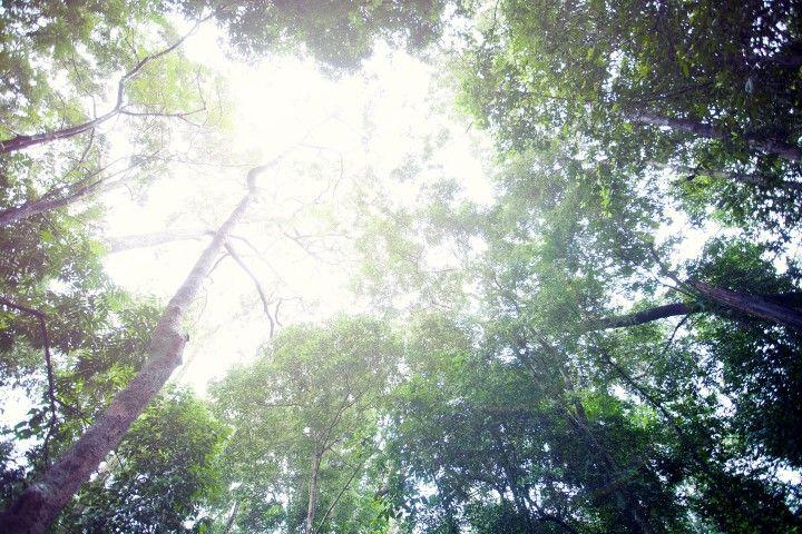 Rừng Phú Quốc