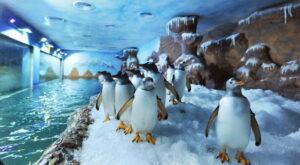 Đến phú quốc coi chim cánh cụt đùa giỡn, bơi lượn - 680718a77f2c141b7c8327f9fb6f85c6-300x165 - Đến Phú Quốc coi chim cánh cụt đùa giỡn, bơi lượn