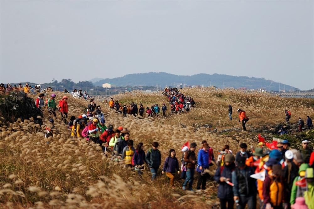 Lễ hội đi bộ Olle Jeju phú quốc - Điểm đến tốt nhất châu Á và giấc mơ soán ngôi jeju. - 10B264C3-5824-434A-908C-E486F8EAF251 - Phú Quốc – Điểm đến tốt nhất Châu Á và giấc mơ soán ngôi Jeju.