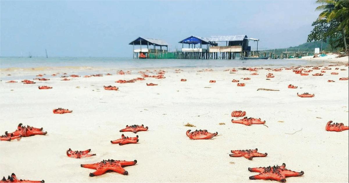 Tên gọi Bãi Sao - Phú Quốc. bãi sao - Tên-gọi-Bãi-Sao-Phú-Quốc - Bãi Sao – Bãi biển thiên đường vạn người mê tại Phú Quốc
