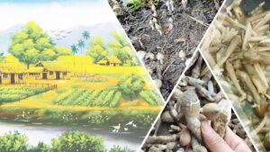 - 9dd941cb24da0de65f884877c34560d8-300x169 - Nấm mối đen – loài nấm quý được nuôi trồng thành công tại Phú Quốc