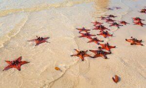 - 6-bai-bien-dep-nhat-phu-quoc_5f0d784d67275-300x180 - 6 bãi biển đẹp nhất Phú Quốc
