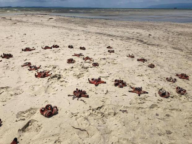 """Từ vụ sao biển chết khô ở Phú Quốc: Dân mạng tiếp tục đào thêm hàng loạt hình sống ảo đầy tội lỗi của du khách - Ảnh 1. - WikiLand  - photo-1-16178463302921640456548 - Từ vụ sao biển chết khô ở Phú Quốc: Dân mạng tiếp tục đào thêm hàng loạt hình sống ảo đầy """"tội lỗi"""" của du khách"""