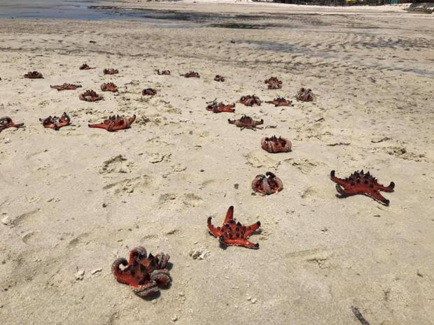 """Từ vụ sao biển chết khô ở Phú Quốc: Dân mạng tiếp tục đào thêm hàng loạt hình sống ảo đầy tội lỗi của du khách - Ảnh 2. - WikiLand  - photo-1-16178463316052076312403 - Từ vụ sao biển chết khô ở Phú Quốc: Dân mạng tiếp tục đào thêm hàng loạt hình sống ảo đầy """"tội lỗi"""" của du khách"""