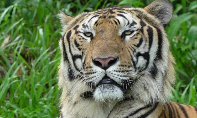 Công viên 'nhốt người thả thú' ở Phú Quốc  - cong-vien-nhot-nguoi-tha-thu-o-phu-quoc-1621424702 - Công viên 'thú thả người nhốt' ở Phú Quốc