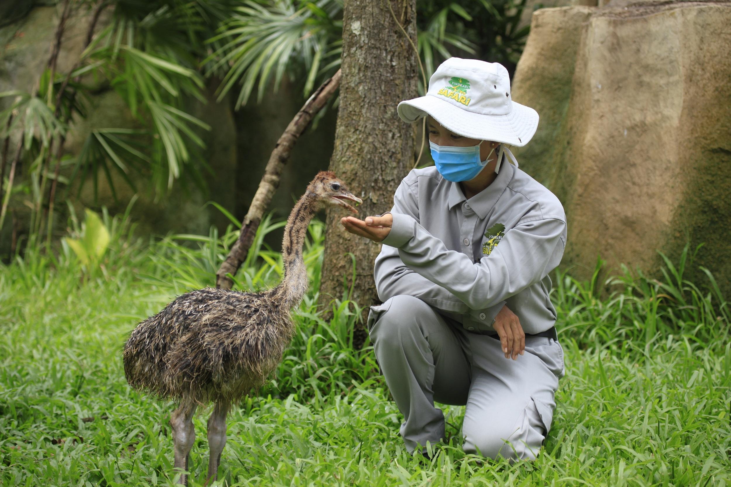 Vinpearl Safari Phu Quoc anh 4  - mg_4460 - Giữ trọn 'vùng xanh' hoang dã trên đảo ngọc