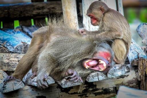 the gioi hoang da anh 1  - a1 - Nhập vai 'nhà động vật học' tại thế giới hoang dã Vinpearl Safari