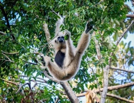 the gioi hoang da anh 2  - a2 - Nhập vai 'nhà động vật học' tại thế giới hoang dã Vinpearl Safari
