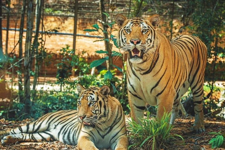 the gioi hoang da anh 4  - a5 - Nhập vai 'nhà động vật học' tại thế giới hoang dã Vinpearl Safari