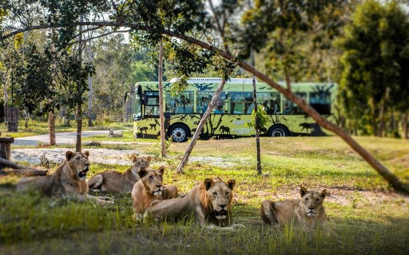 the gioi hoang da anh 5  - a6 - Nhập vai 'nhà động vật học' tại thế giới hoang dã Vinpearl Safari