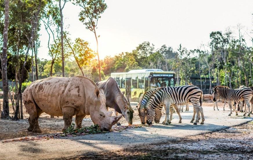 the gioi hoang da anh 6  - a7 - Nhập vai 'nhà động vật học' tại thế giới hoang dã Vinpearl Safari