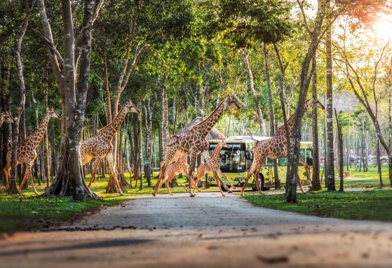 the gioi hoang da anh 7  - a8 - Nhập vai 'nhà động vật học' tại thế giới hoang dã Vinpearl Safari